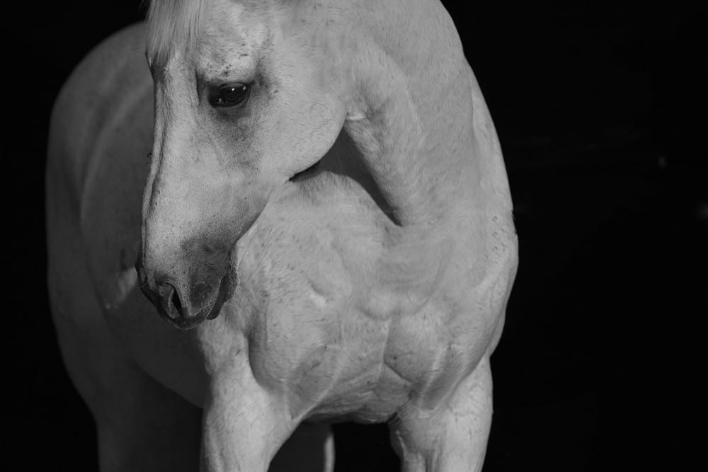 BLUE GUM FARM – STALLIONS – STUDIO